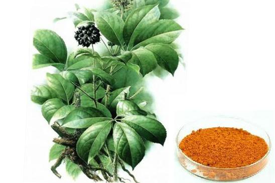 Acanthopanax Senticosus | Acanthopanax Senticosus Extract